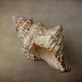 Shell #06 by Hans Janssen