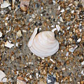 Shell 1 by Marcie Daniels