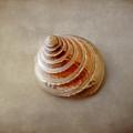 Shell #11 by Hans Janssen