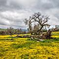 Shell Creek Awash In Yellow by Lynn Bauer