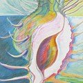 Shell Metamorphosis by Kathy Mitchell
