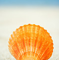 Shell On Beach by Mary Van de Ven - Printscapes
