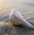 Shell On The Beach by Paul Westcott