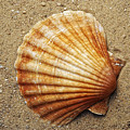 Shell On The Sand by Michal Boubin