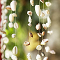 Shell Windchimes by Kyle Rothenborg - Printscapes