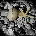 Shells And Starfish by Angie Tirado