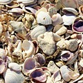 Shells Aplenty by Judith L Schade