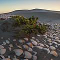 Shells At Desert by Josafat De la Toba