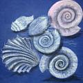 Shells by Barbara Teller