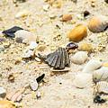 Shells by Brandon Stansbury