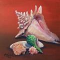 Shells by Colleen Birch