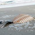 Shells by Dan Emberton