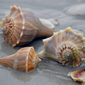 Shells For Barb by Pat Guichet