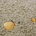 Shells In The Sand by Brett Winn