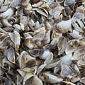 Shells by Lauri Novak