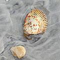 Shells On The Beach II by Daniel Caracappa