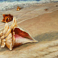 Shells On The Shore by Susan Jenkins