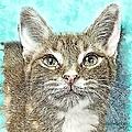 Shelter Cat Fantasy Art by Artful Oasis