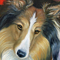 Sheltie - Collie by Beverly Fuqua