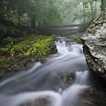 Shenandoah Mountain Stream by Dennis Kowalewski