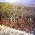 Shenandoah Wilderness by Susan  Epps Oliver