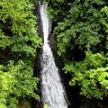Shepperd's Dell Falls, Oregon by Aashish Vaidya
