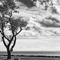 Sherwood Island by John Rizzitelli