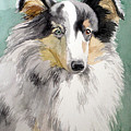 Shetland Sheep Dog by Christopher Shellhammer