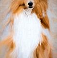 Shetland Sheepdog - Sheltie by Ericamaxine Price