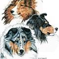 Shetland Sheepdogs by Kathleen Sepulveda