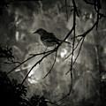 Shhhh A Bird by Amy Delaine