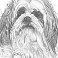 Shih-poo by Barbara Keith