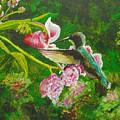 Shimmering Hummingbird  by Susan Bruner