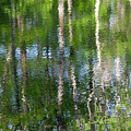 Shimmering Reflection by Marvin Averett