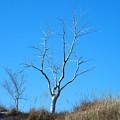 Shimmering Tree by Linda Kerkau