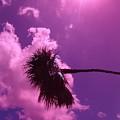 Shine On Me by Florene Welebny