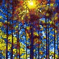 Shining Through by Donna Bentley