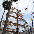 Ships Palm by Jost Houk