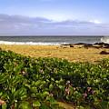 Shipwreck Beach by Sally Weigand