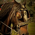 Shire Horse by Scott Carruthers