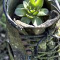 Shoe Plant 2 by Sam Davis Johnson