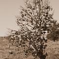Shoe Tree In Sepia by Carol Groenen