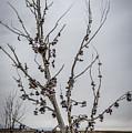 Shoe Tree by Paul Freidlund