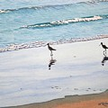 Shore Birds by Mike Robles