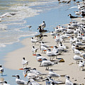 Shorebird Gathering by Marilee Noland