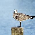 Shorebird  by John Greim