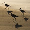 Shorebird Silhouettes by Bruce Frye
