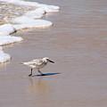 Shorebird by Ty Nichols