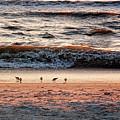 Shorebirds by Lars Lentz