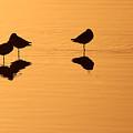 Shorebirds On The Sea At Sunrise by Max Allen